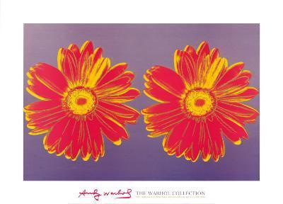 Daisy, c.1982 (Double Pink)