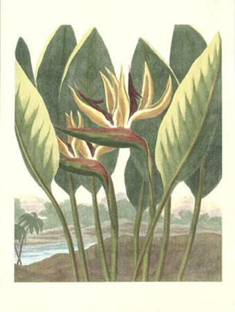 Thorton's Botanical III
