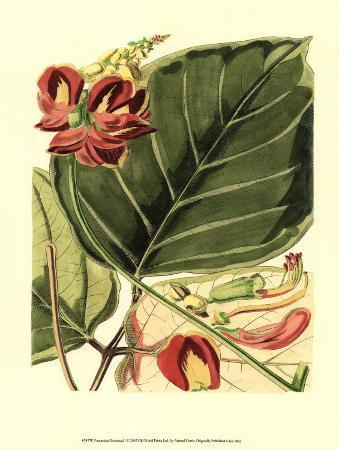 Fantastical Botanical I