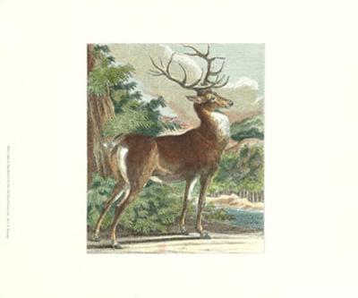 Deer in the Wild IV