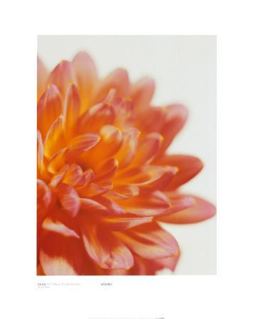 Dahlia, Soft Pink and Yellow on White