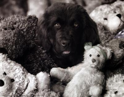 Dog with Teddies