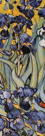 Irises, Saint-Remy, c.1889 (detail)