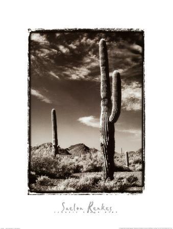 Saguaro Organ Pipe