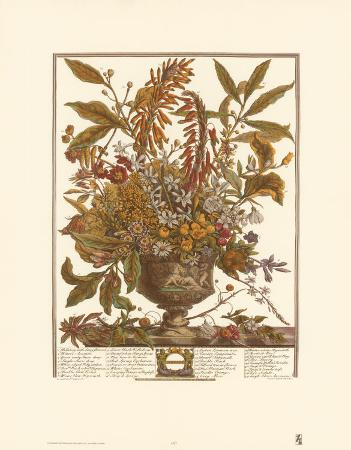Twelve Months of Flowers, 1730, January