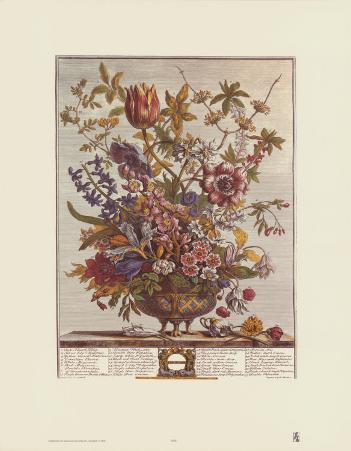 Twelve Months of Flowers, 1730, February