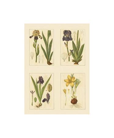 Botanicals III