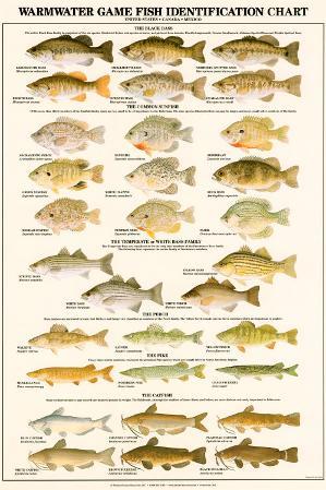 Warmwater Gamefish of North America
