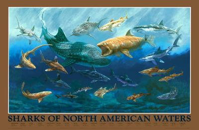 Sharks of NA Waters