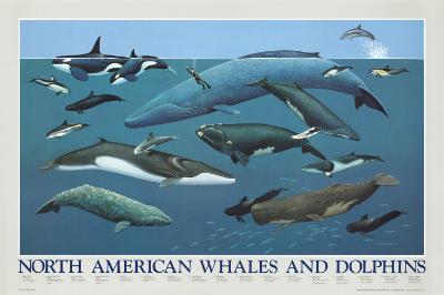 North American Whales and Dolphins