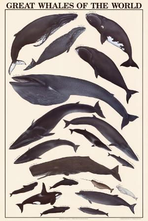 Great Whales of the World