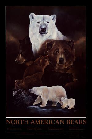 North American Bears