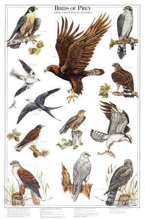 Birds of Prey II