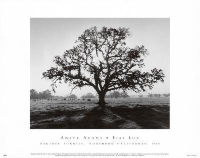 Oak Tree, Sunrise