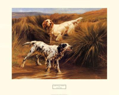 English Setters in a Marshland