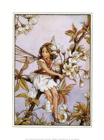 The Wild Cherry Blossom Fairy