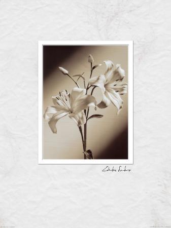 Black and White IIII