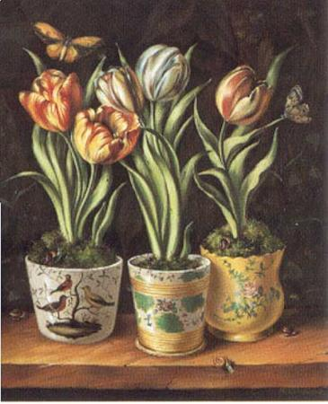 Pots with Tulips