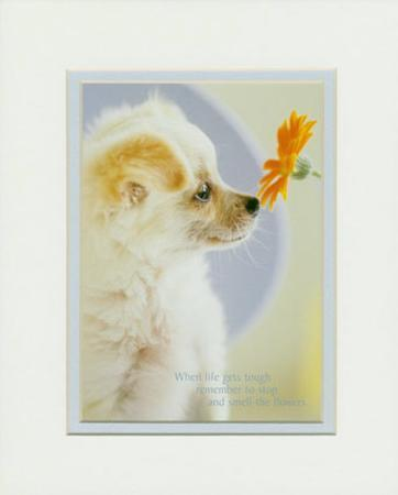 Dog & Daisy