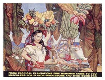 Bananas from Tropical Plantations