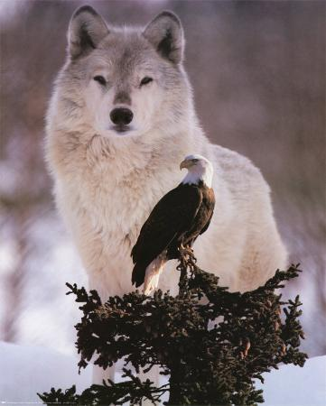Wolf and Eagle