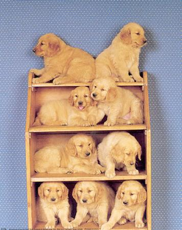 Bookcase Pups