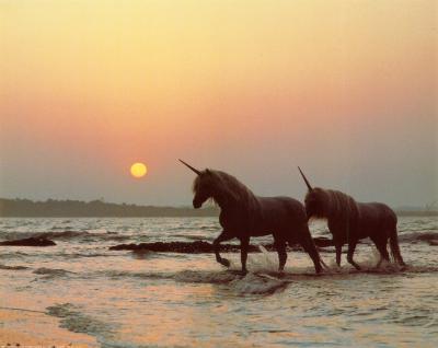 Last Unicorns