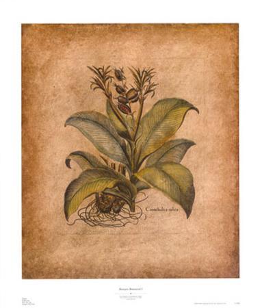 Banyan Botanical I