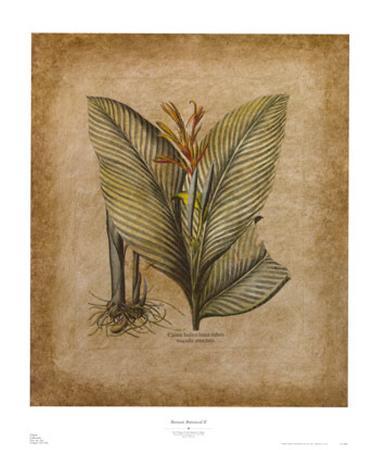 Banyan Botanical II