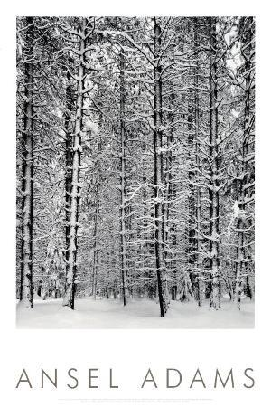 Pine Forest in Snow, Yosemite National Park, 1932