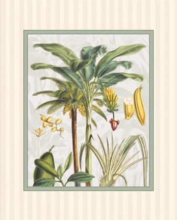 Bamboo Palm I