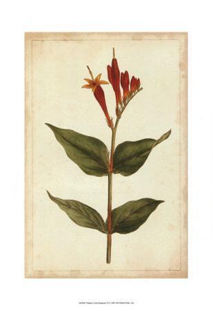 Vibrant Curtis Botanicals III