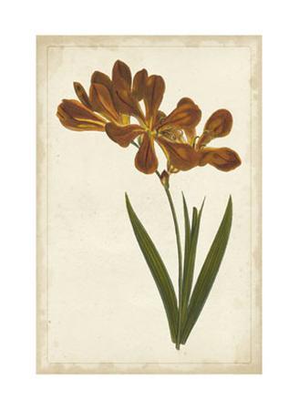 Vibrant Curtis Botanicals VI