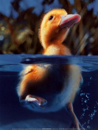 Duckling under Water