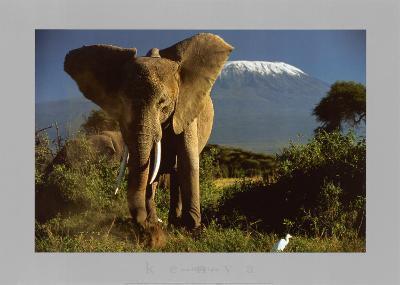Elephant by Mount Kilimanjaro, Kenya