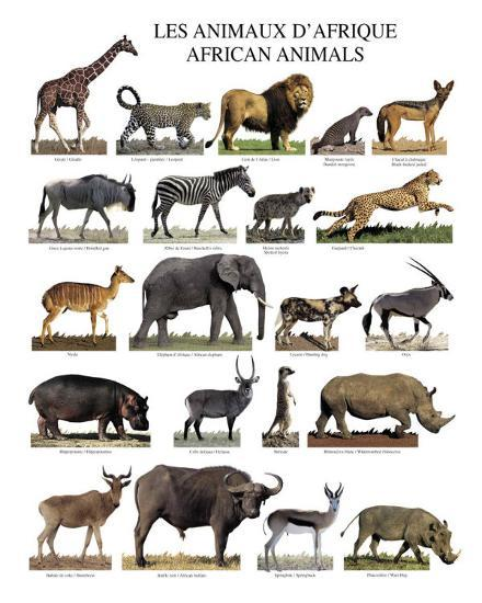 african animals print at allposters com