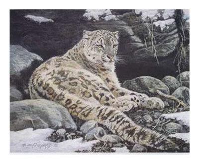 Awake Snow Leopard