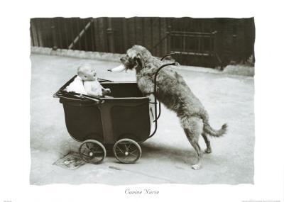 Canine Nurse