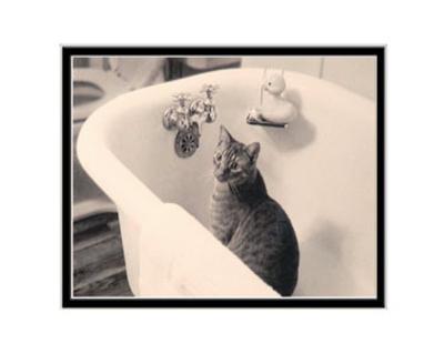 Tub Cat
