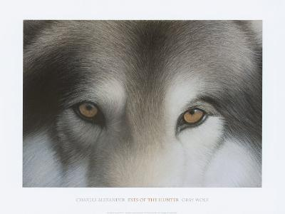 Eyes of the Hunter: Gray Wolf