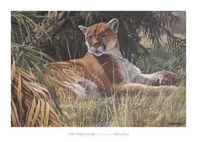 Last Sanctuary- Florida Panther (detail)
