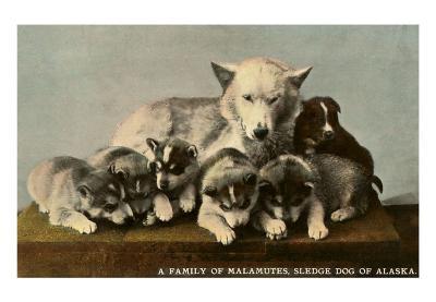 Malamute Family