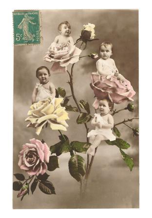Babies in Roses