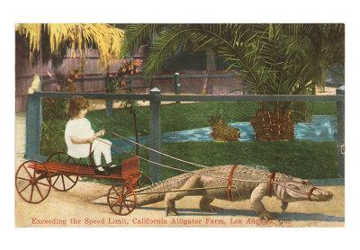 Alligator Pulling Cart, Los Angeles, California