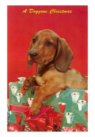 Doggone Christmas, Dachshund