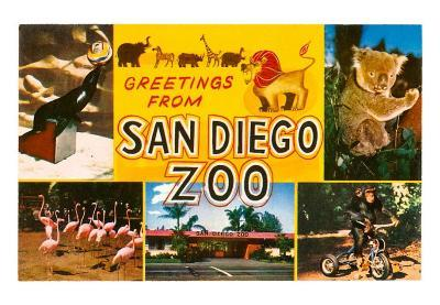 Greetings from San Diego Zoo, California