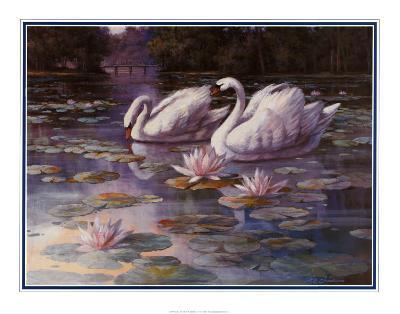 Swans and Bridge