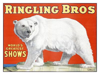 Ringling Brothers: Polar Bear
