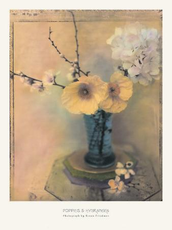 Poppies and Hydrangea
