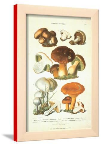 Fungi I
